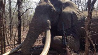 Matan a elefante de casi 60 años en Zimbabue
