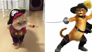 Disfraz de Halloween de un gato pirata es todo un éxito en redes sociales