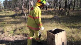 Australia: hombre encuentra algo en tenebroso bosque que le cambió la vida