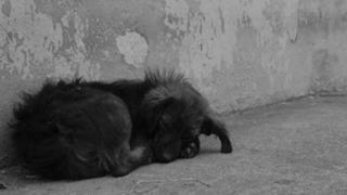 Perros abandonados lucen impresionante cambio gracias a nobles personas