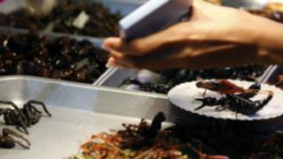 ¿Nuevo hábito alimenticio?: recomiendan comer insectos en lugar de carne