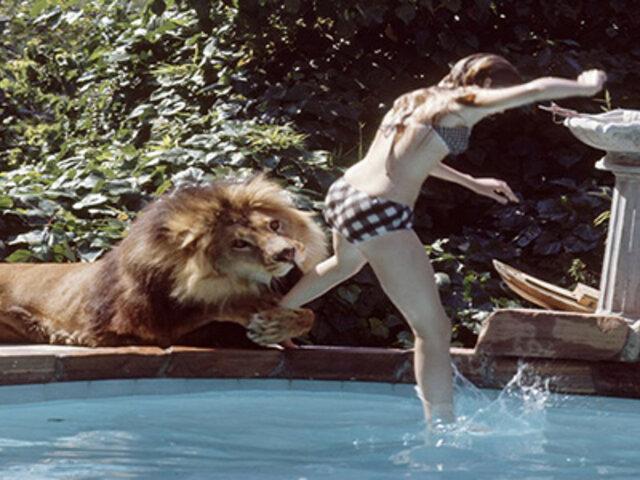 FOTOS: ¿Cómo es vivir con una manada de leones en casa?