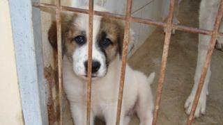Hasta cinco años de cárcel recibirían quienes maltraten a los animales