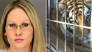 Mujer fue mordida por un tigre tras ingresar a su jaula en estado de ebriedad