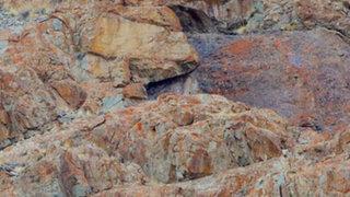 FOTOS: leopardo de las nieves, uno de los maestros del camuflaje