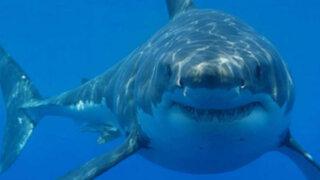 Mira al tiburón blanco más grande registrado por una cámara