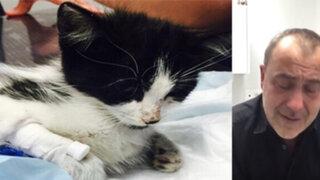 Conmovedor mensaje de un veterinario que no pudo salvar la vida de un gato maltratado