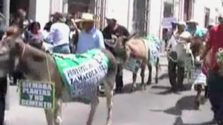 Arequipa: agricultores protestan llevando burros a Consejo Regional