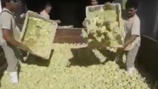 Argentina: lanzan a la basura millones de pollos por falta de alimento