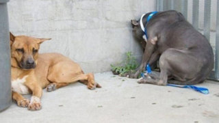 ¡Cuidado! Si tu mascota está haciendo esto debes actuar rápidamente