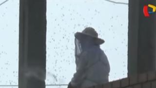 Chimbote: varios heridos por picaduras de abeja