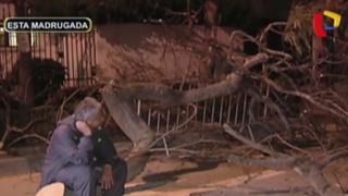 Magdalena: vecinos denuncian que matones retiraron árboles en jr. Félix Dibós
