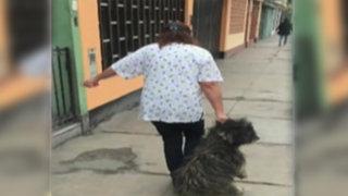 San Luis: veterinaria es acusada de maltratar a un perro