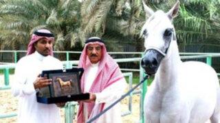 Autoridades de Arabia Saudita ordenan ejecutar un caballo por ser 'homosexual'