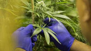 Colombia legaliza uso de la marihuana con fines medicinales