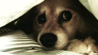 ¡Cuida a tu mascota en estas fiestas! Cuatro efectos negativos de los pirotécnicos