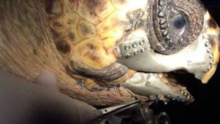 FOTOS: impresión en 3D salvó una vida al realizar una prótesis de mandíbula para esta tortuga
