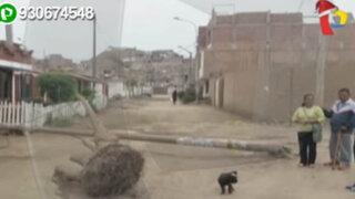 Caída de poste en transitada calle estuvo a punto de causar una tragedia