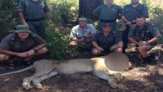 FOTOS: león malherido se salvó de una muerte segura gracias al aviso de unos turistas