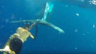 VIDEO: joven arriesga su vida para  rescatar a ballena atrapada