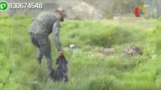 Impactantes imágenes: presuntos soldados torturan y degüellan animales