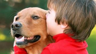 Verano 2016: consejos para el cuidado de su mascota ante ola de calor