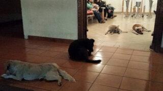 Impresionante muestra de fidelidad de unos perros callejeros hacia la mujer que los cuidaba