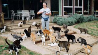 EEUU: mujer convive con mil gatos y espera acoger muchos más