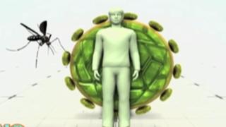 OMS convoca comité de emergencia por virus Zika
