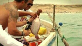 Del mar a la mesa: la aventura de reconocidos chefs para preparar el mejor cebiche