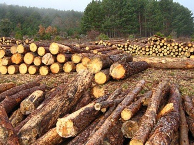 Empresarios denuncian trabas para exportar madera
