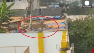 India: leopardo ingresa a escuela y ataca a seis personas