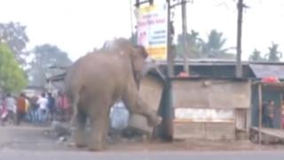 Elefante destruyó más de cien casas en la India