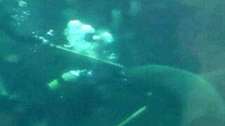 Sudáfrica: tiburón casi le arranca el brazo a un buzo