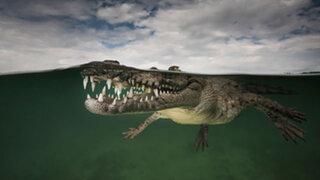 FOTOS: 15 espectaculares imágenes captadas entre el agua y la superficie