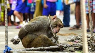 India: maltratan y humillan a un mono hambriento por robar comida en una comunidad