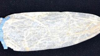 VIDEO: subastan preservativo de 200 años de antigüedad