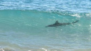 Imarpe descarta presencia de tiburones en playas de Lima por Fenómeno El Niño