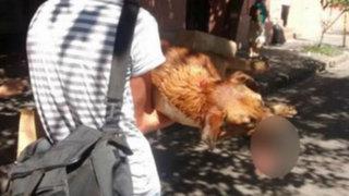 FOTOS: perro sufre graves lesiones tras morder bomba dejada por manifestantes