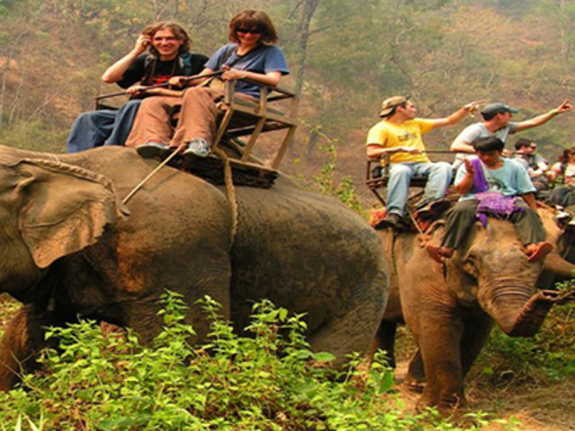 Conoce la terrible y cruel historia que hay detrás de los entrañables elefantes de Tailandia