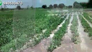 WhatsApp: agricultores pierden sus cultivos por desborde de río Chira en Paita