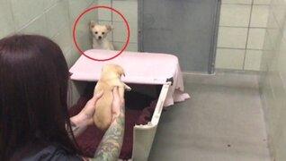 Mira el conmovedor reencuentro de perrita rescatada y sus crías