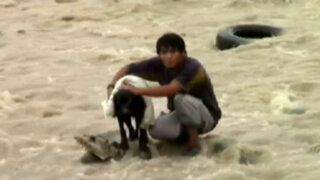 Héroes de carne y hueso: arriesgaron sus vidas para salvar a niños y mascotas