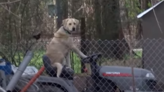 YouTube: transmisión en vivo es interrumpida por singular acto de can