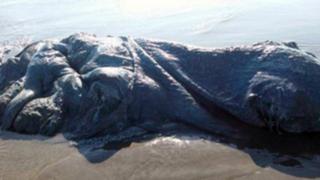 VIDEO: encuentran extraña criatura en playa de México