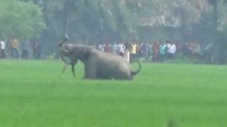 VIDEO: elefante salvaje mata a hombre en la India