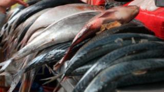 Semana Santa: precios y recomendaciones para comprar pescado