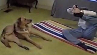 Perrito que practica yoga causa furor en redes sociales