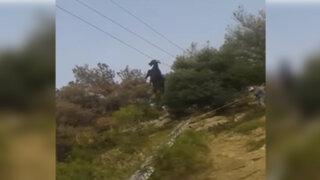 Grecia: rescatan a una cabra que había quedado colgada en un cable telefónico