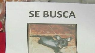 Villa El Salvador: familia denuncia el robo de su mascota